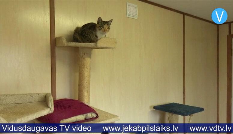"""Līvānu biedrība """"Ingato"""" ierīko moduļu tipa kaķu māju"""