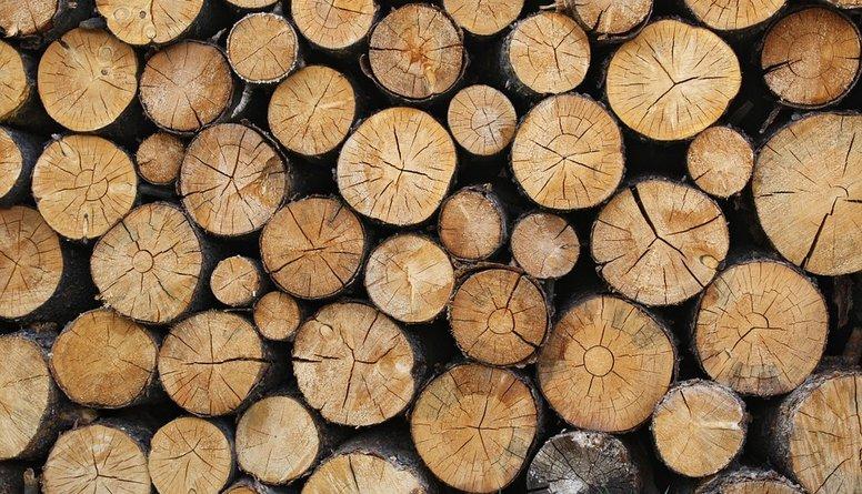 Kuras pasaules valstis ir spēcīgas kokrūpniecībā?