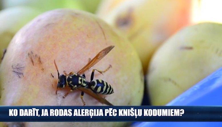 Ko darīt, ja rodas alerģija pēc kukaiņu kodumiem?