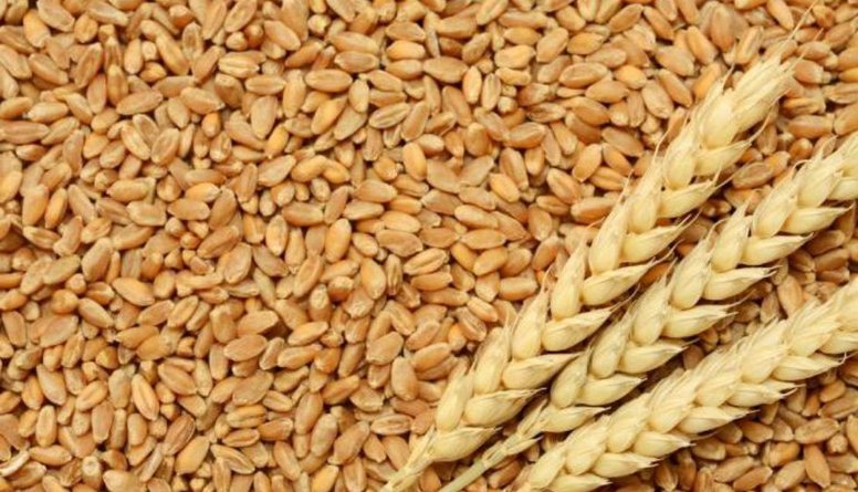 Rudzu graudu produkti - pret saslimšanām ar ļaunām slimībām!