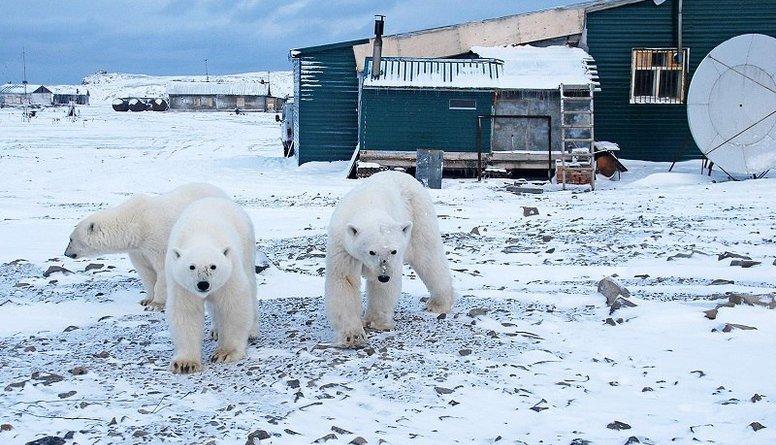 Leduslāču dēļ ārkārtas stāvoklis Novaja Zemļa arhipelāgā