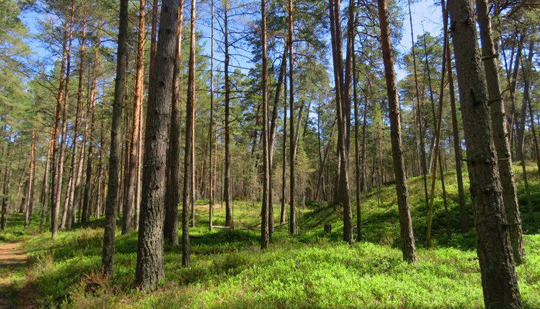 Dubrovskis: Dabas aizsardzība ir labi finansēts bizness visā pasaulē