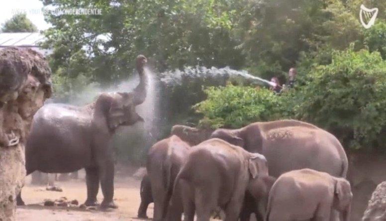 Dublinas zooloģiskajā dārzā ziloņiem atvērts jauns peldbaseins