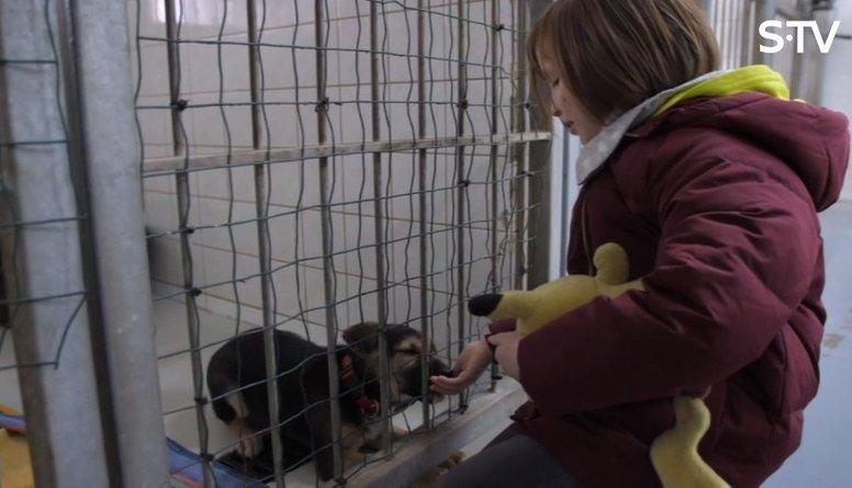 Kā kļūt par brīvprātīgo dzīvnieku patversmē?