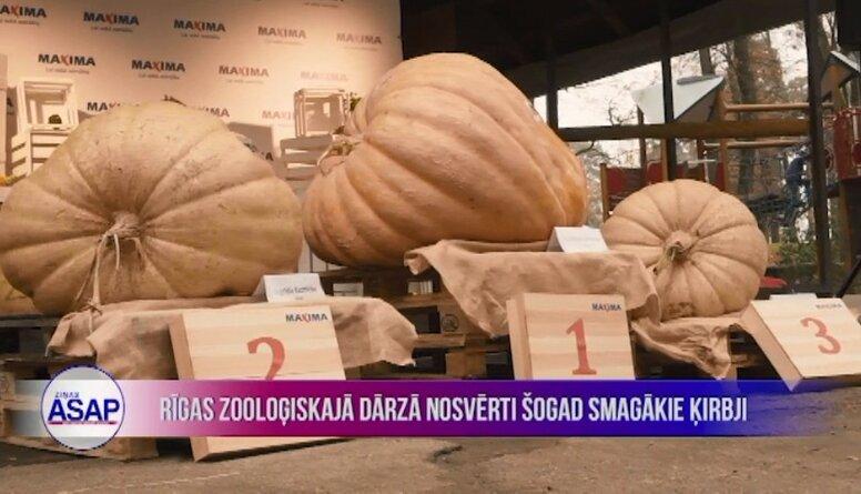 Rīgas Zooloģiskajā dārzā nosvērti šogad smagākie ķirbji
