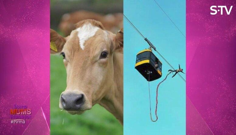 Vai Liene Stepena prot izslaukt govi?