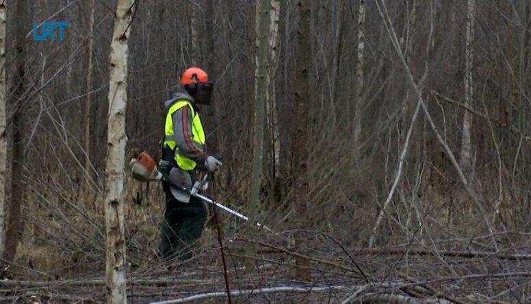Jaunaudžu kopšana - tikpat svarīga kā mežu stādīšana