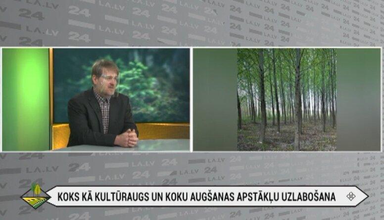 Papeļu audzēšanas potenciāls Latvijā
