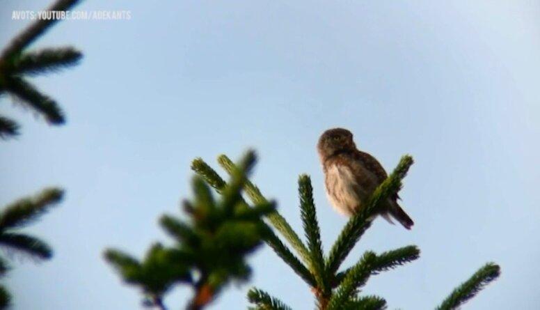 Putnu daudzveidība Zīles dabas takā