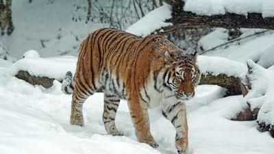 Nepalaid garām - Ziemas naktis zoodārzā!