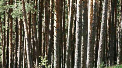Vai cilvēku nezināšana izraisa negatīvu attieksmi pret mūsdienīgu meža apsaimniekošanu?