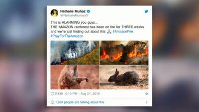 Sociālajos tīklos populārākie Amazones meža ugunsgrēku attēli neatspoguļo realitāti