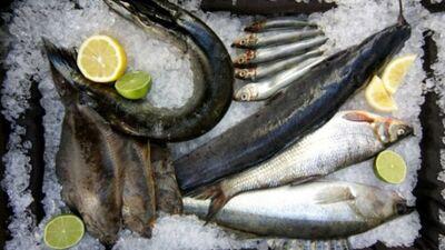 Cik droši ir ēst Baltijas jūras zivis?