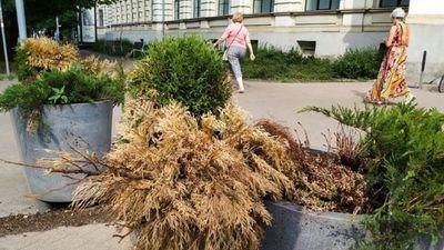 Putniņš: Smieklīgi, ka Rīga ar savu budžetu nevar atļauties apliet puķes