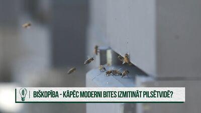 Kādēļ bites ir nepieciešamas arī pilsētvidē?