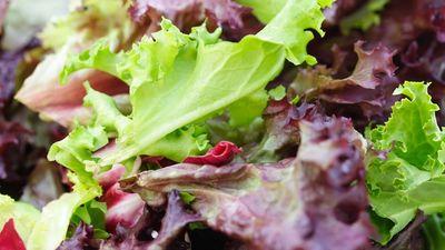 Zaļas vai sarkanas krāsas salāti. Kuri vērtīgāki?