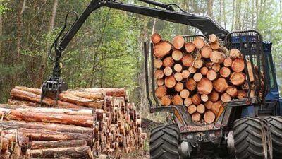 Krastiņš: Zemas pievienotās vērtības koku izvešanas bizness vienreiz ir jābeidz!