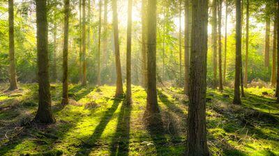 """Divi svarīgi aicinājumi no """"Latvijas valsts mežiem"""" tiem, kas atpūšas mežā"""