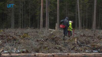 Šogad agrāk nekā ierasti uzsākti meža stādīšanas darbi