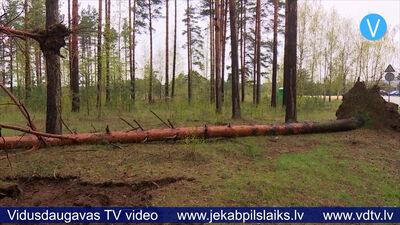 Jēkabpils Mežaparkā vējš ar saknēm izgāzis vairākus kokus
