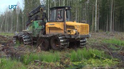 Mežā aktīvi rit augsnes gatavošanas darbi