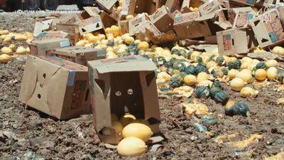 Ko darīt, lai iegādātā un saražotā pārtika tomēr nenonāktu atkritumos?