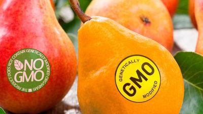 Kas ir ģenētiski modificēta pārtika?