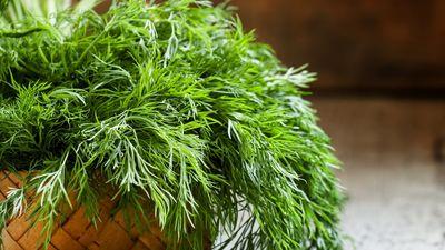 Kādi labumi slēpjas dillēs un citos zaļajos garšaugos?
