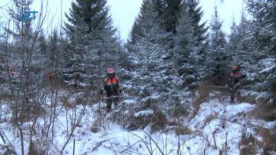 Jaunaudžu kopšanas darbi notiek arī ziemā