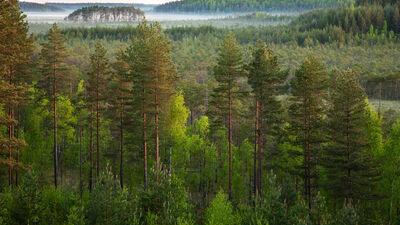 Muižnieks: Jo koptāki būs mūsu meži, jo dosim lielāku ieguldījumu klimata pārmaiņu jautājumā