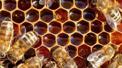 Bišu izcelsmes produkti neauglības ārstēšanai