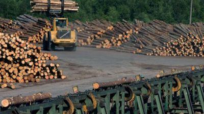 Latvijas kokrūpniecība Eiropas kontekstā