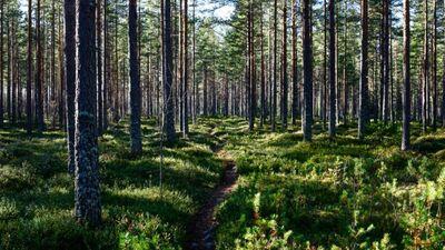 Anitens: Paņemiet karti, atrodiet lielu meža masīvu un brauciet staigāties!