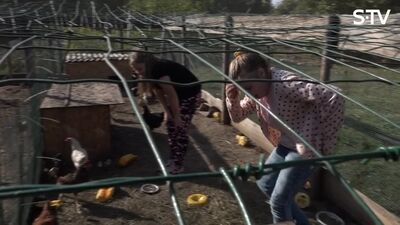 Magone māca bērnus atšķirt mazus gaiļus no vistām