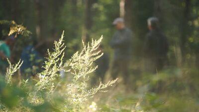 Notikusi pirmā sabiedriskā apspriešana par Juglas meža kopšanu