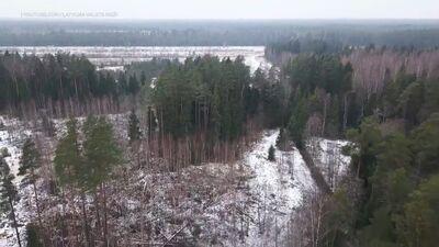 Kāpēc pavadot laiku mežā, īpaša vērība jāpievērš arī tam, kur atstāj savu auto?