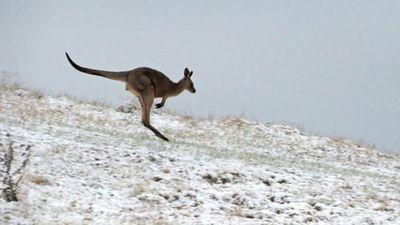 Austrāliju pārsteidzis sniegs!