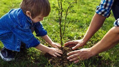 """19. septembris - Pasaules talka arī Latvijā, kurā stādīsim """"Laimes kokus"""""""