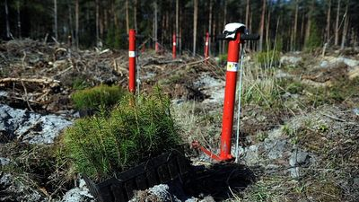 Kotovičs: Šogad LVM plāno iestādīt 24 miljonus koku